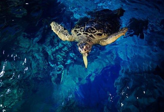 une_tortue_sealife