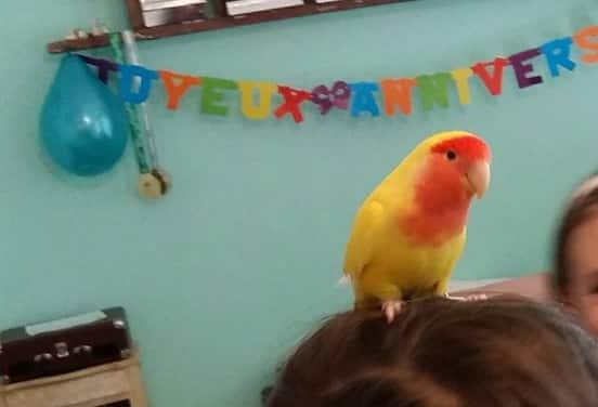 une_anniversaire animaux party_sezame